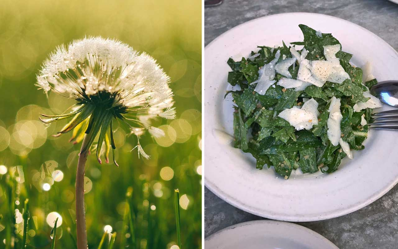 dandelion, food, facts, eat