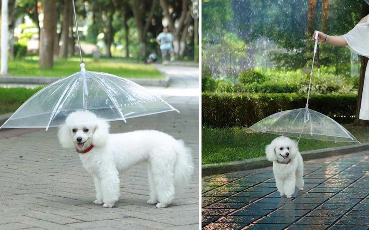 dogs, rain, umbrella, dogbrella