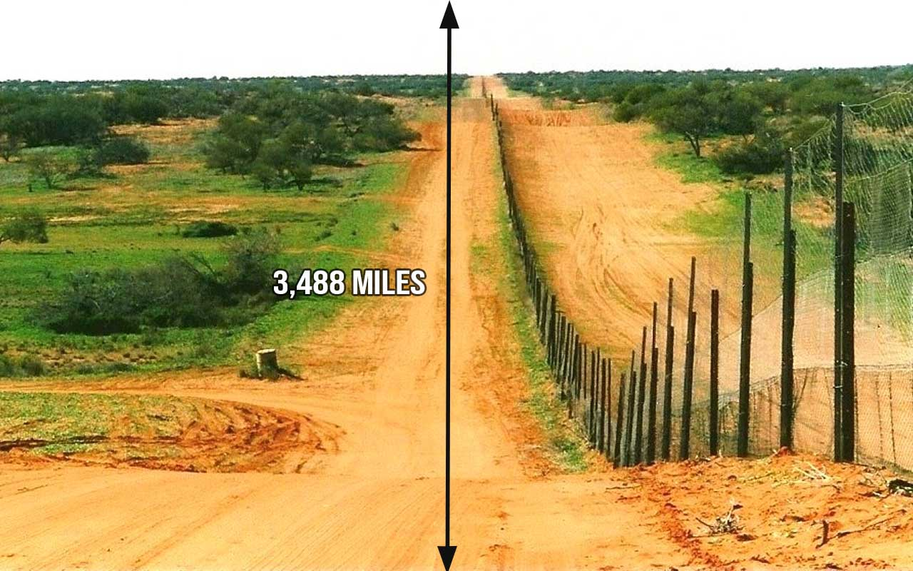 The Dingo Fence, Australia, facts, geographical, life