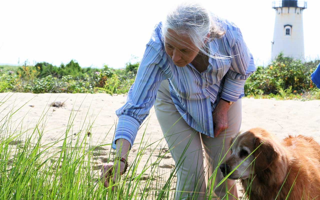 Jane Goodall, animals, rescue, facts, life