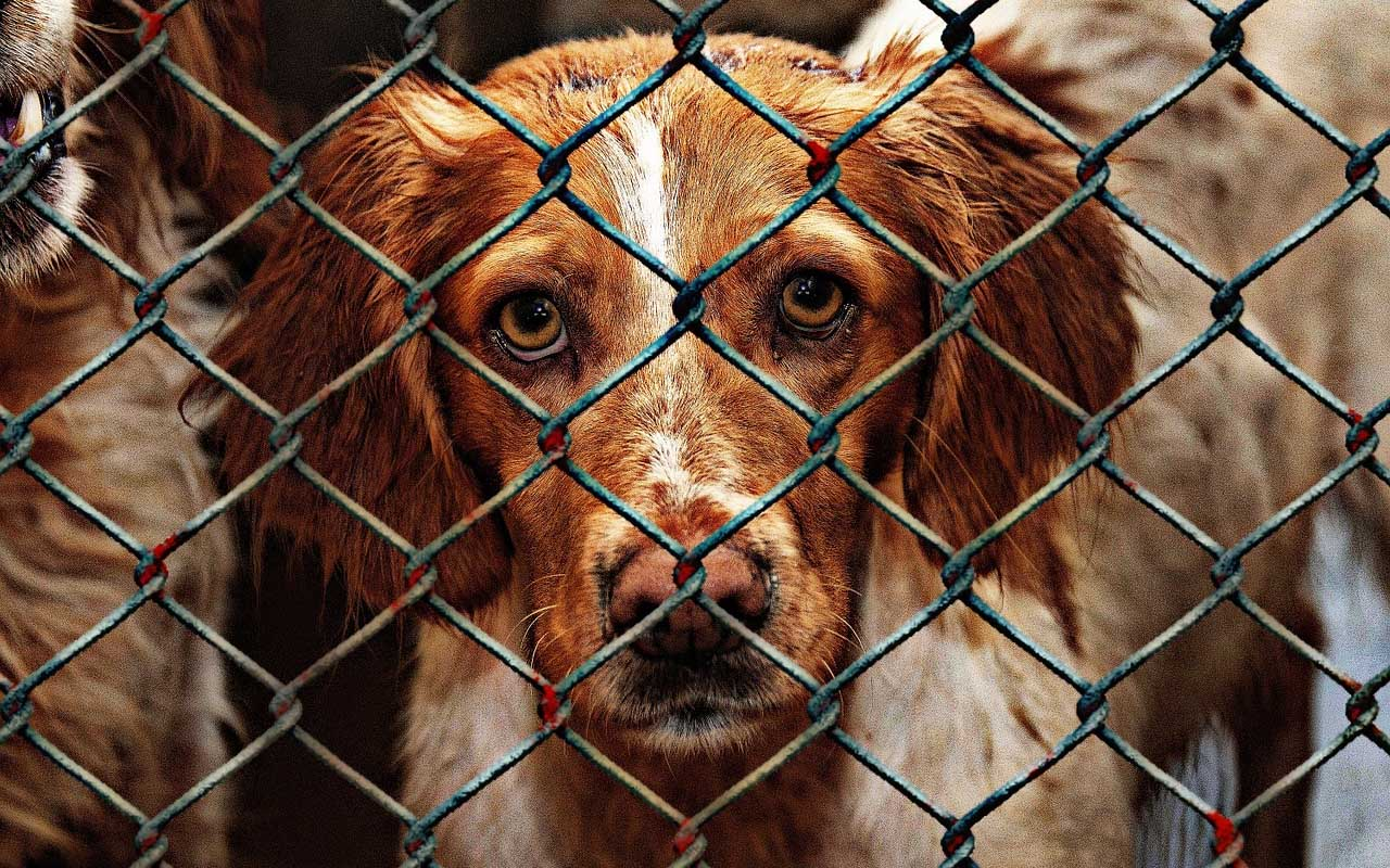 animals, life, dogs, cats, nature, humans, facts, rights