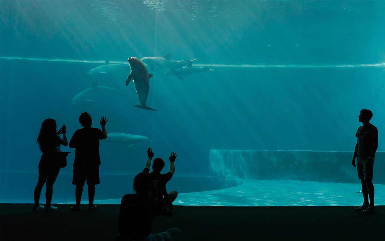 whales, dolphins, people, nature, ocean, animals, life, facts, survival