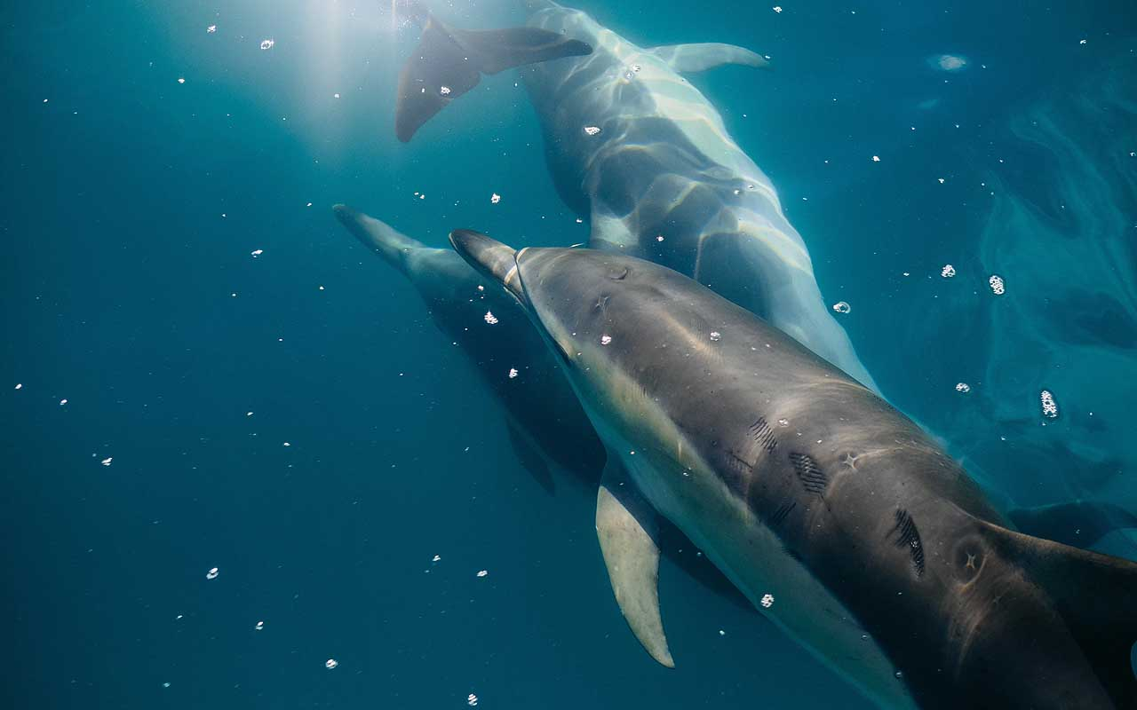 dolphins, animals, sea, water, cool facts, life, people