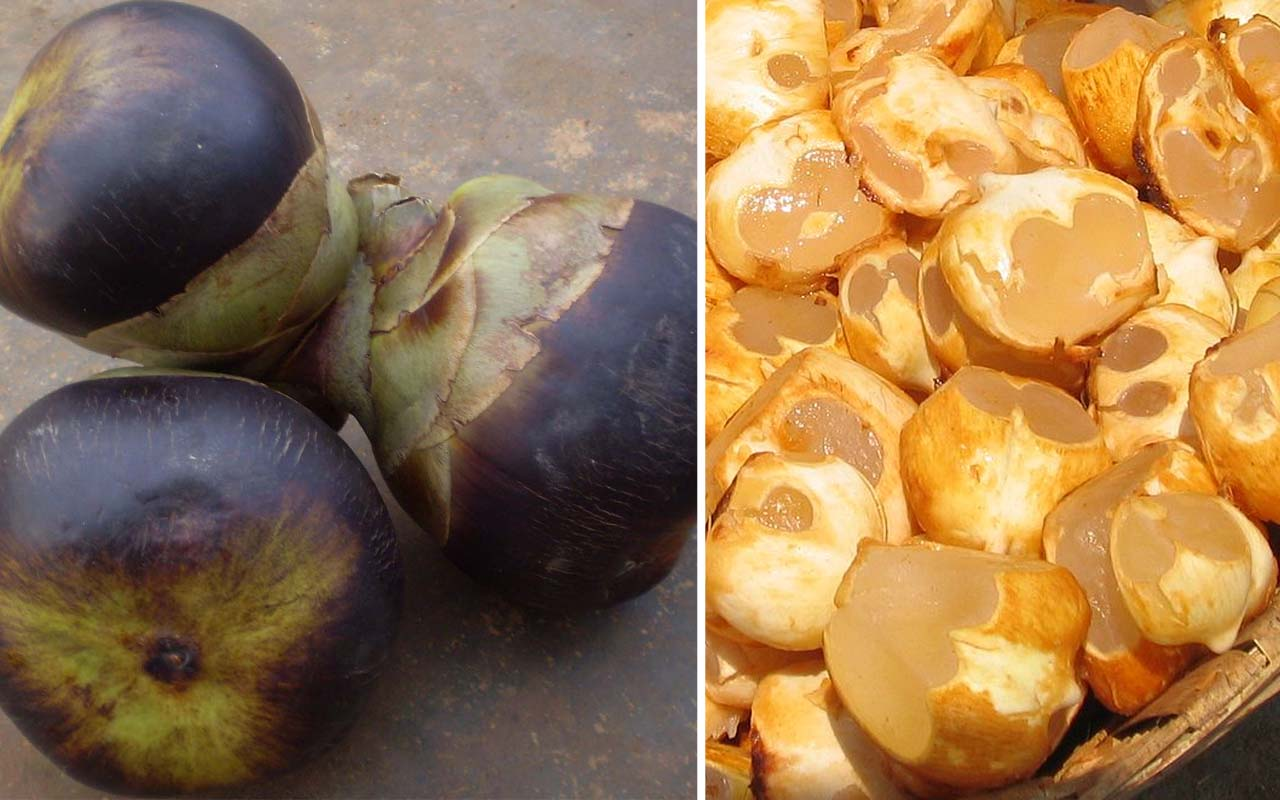 Nungu, ice apple, fruits, life, people, weird, India, Asia