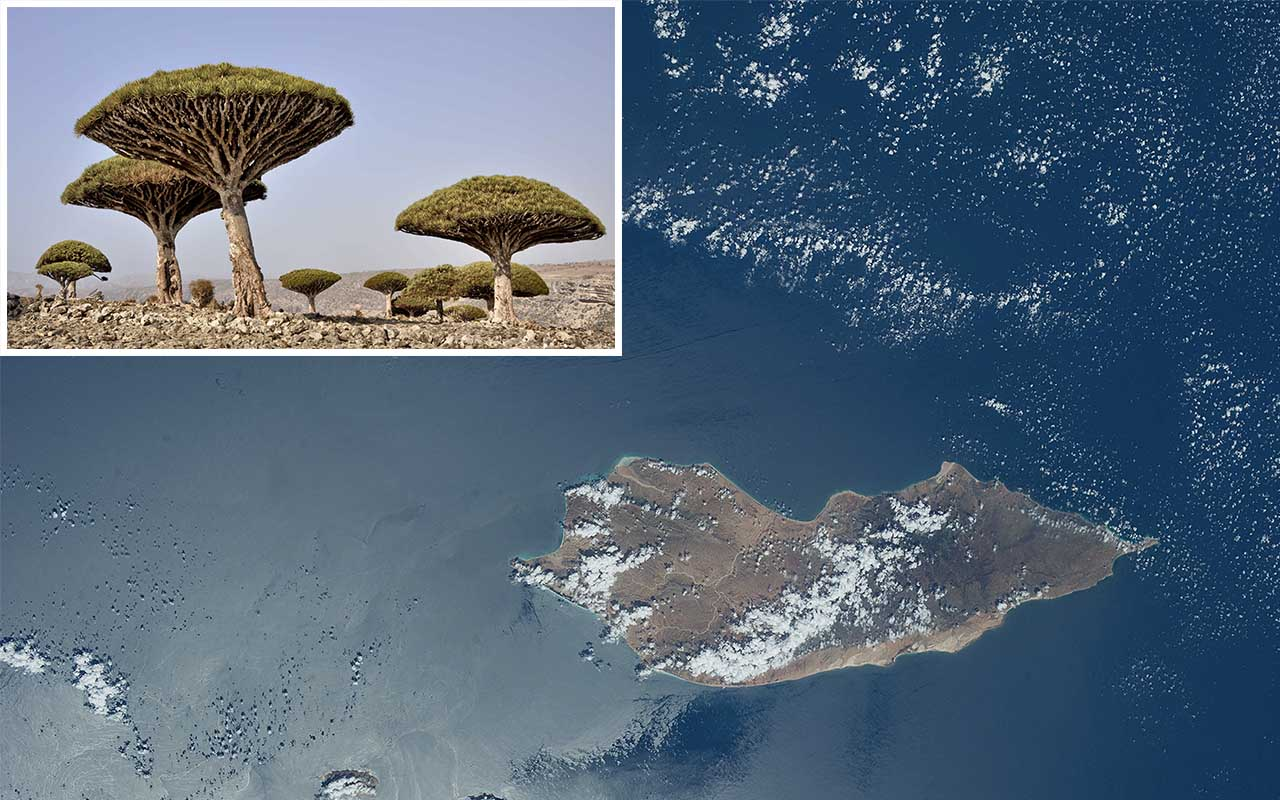 Socotra Island, Dragon, tree, facts, islands, life
