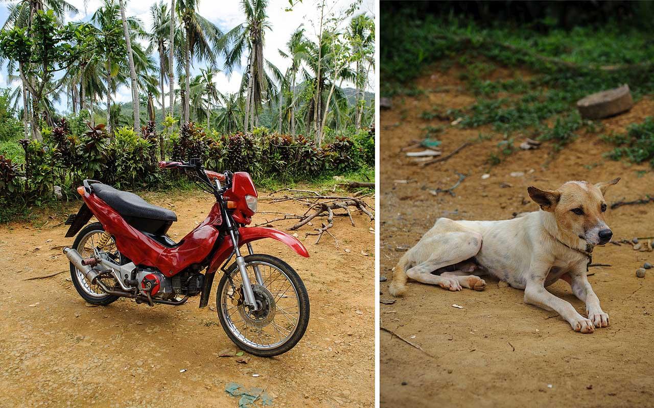 dog, pet, bike, family, life, vacation, travel, Philippines