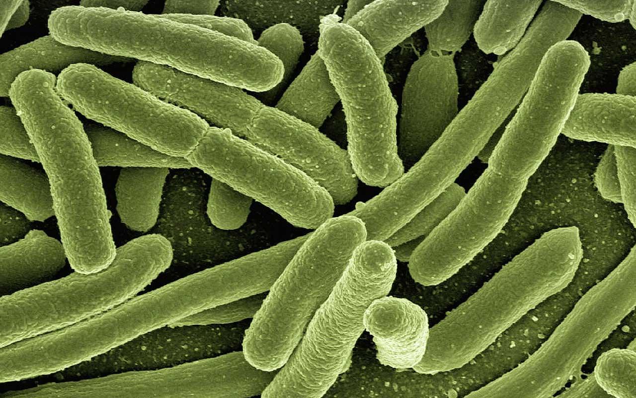 bacteria, virus, human, body, facts, random, topics