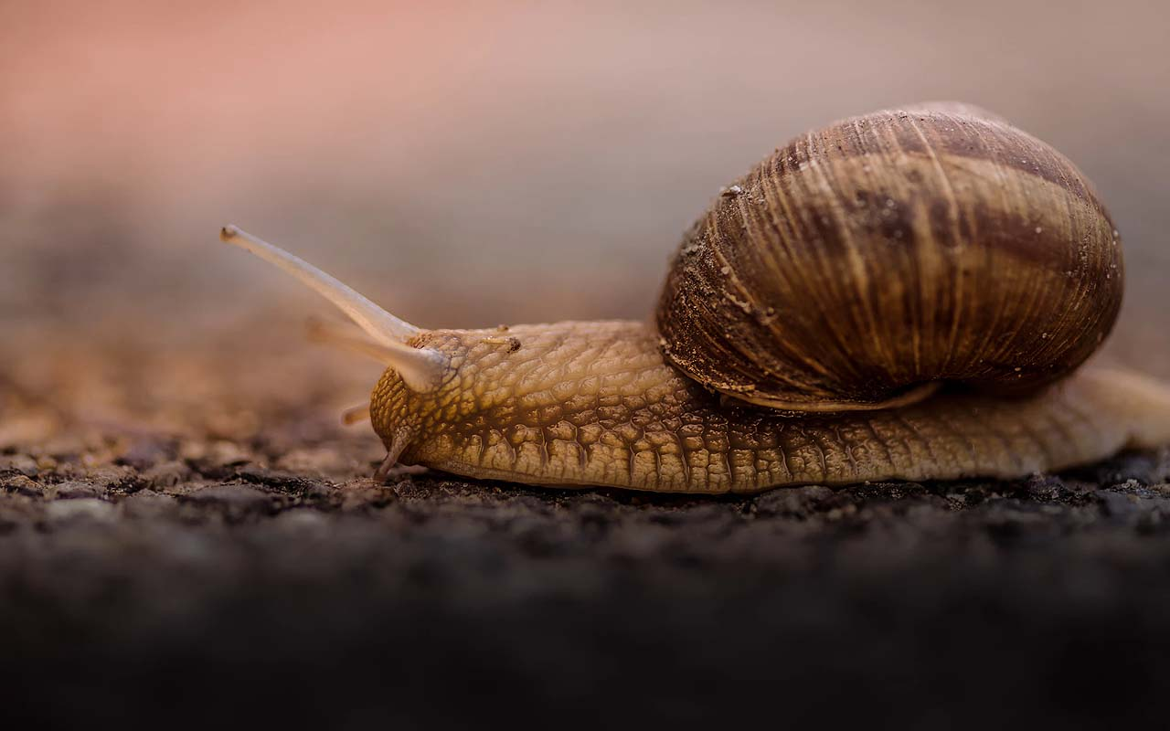 snail, drinking, coffee, food, facts, life
