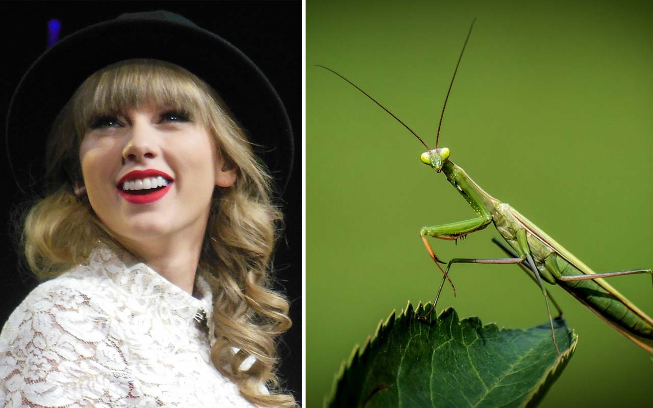 Taylor Swift, Praying mantis remover, animals, fame, facts, life, celebrities, funny, history