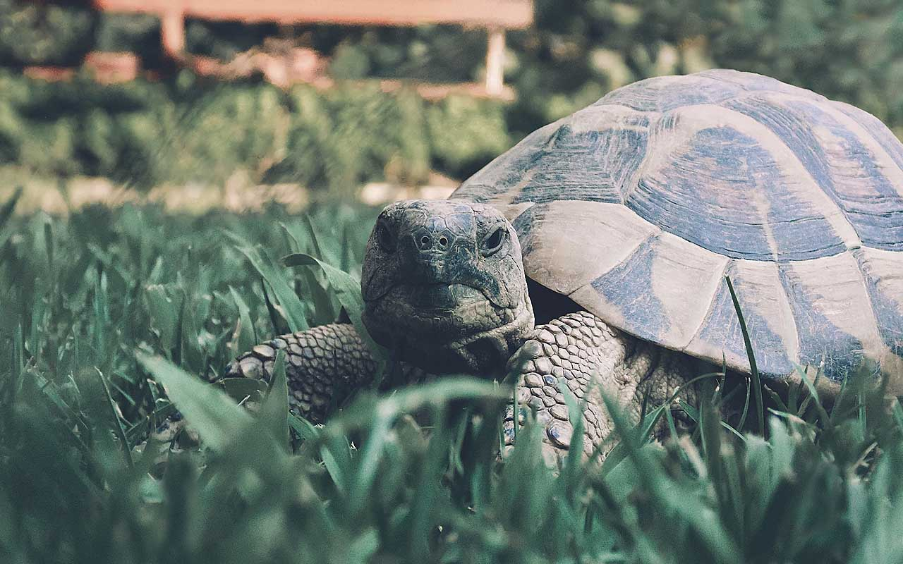 tortoise, animal, facts, nature, Earth, New York, found