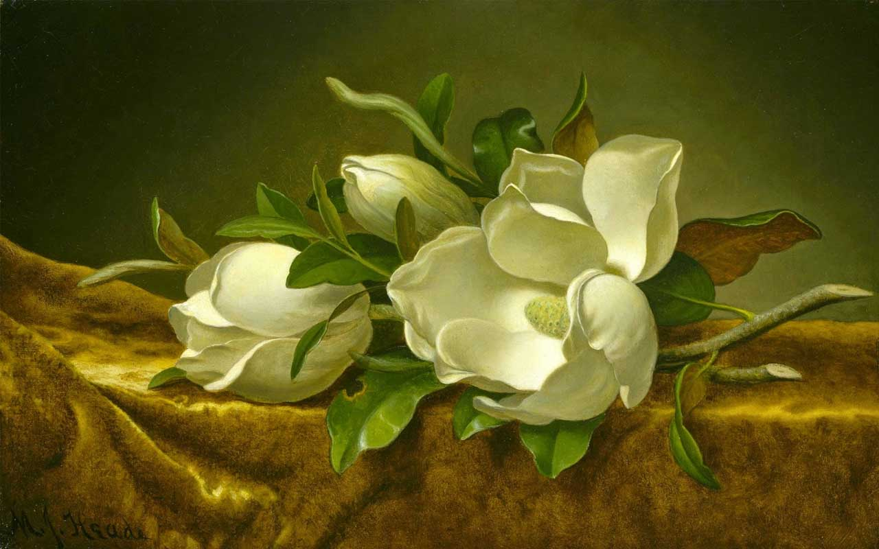 Magnolias on Gold Velvet Cloth, painting, old, history, facts, people, junk