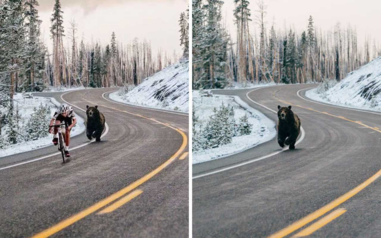 bear, cyclist, man, photos, doctored, photoshop