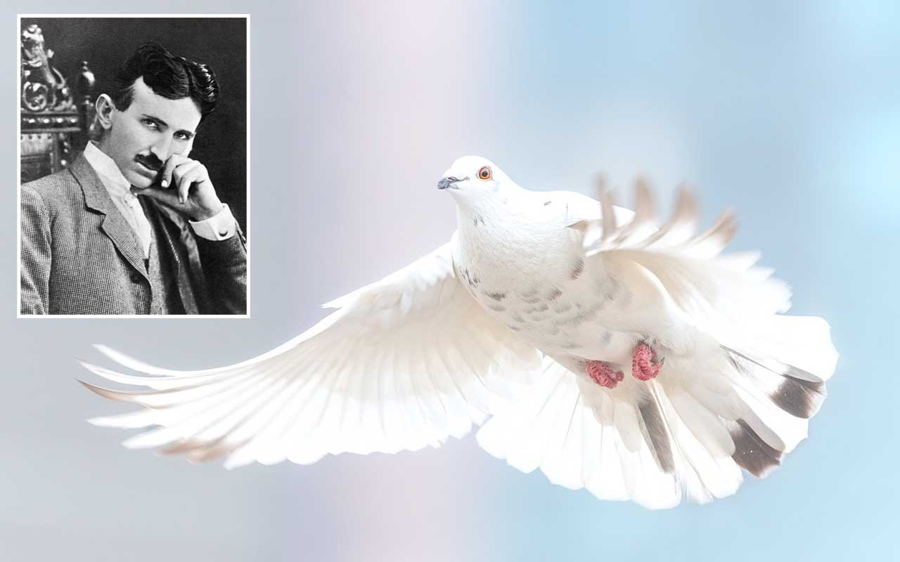 Nikola Tesla, Pigeons, white, facts, life, light, history, science, prominent