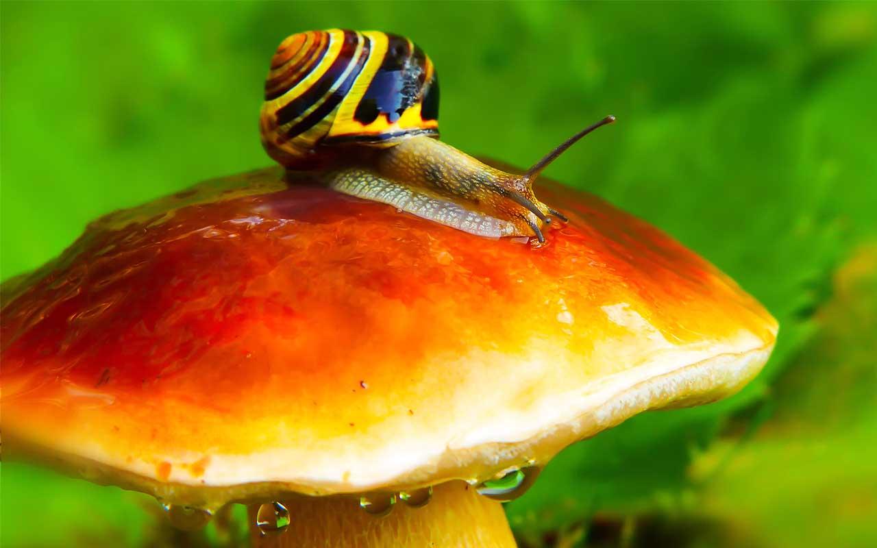Steve Irwini, snail, Crikey, facts, animals, life, Australia