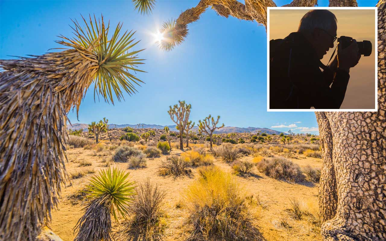 Joshua Tree National Park, old man, missing, trekking, facts, life, wild, wilderness
