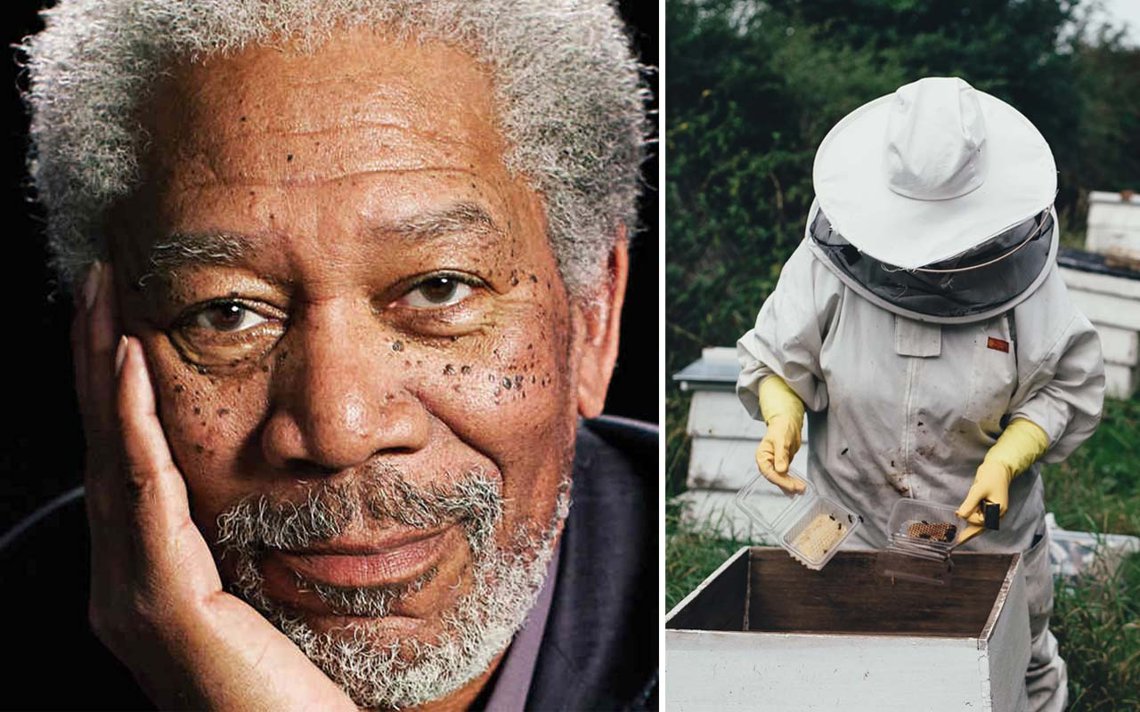Morgan Freeman, bee, nature, life, wildlife, celebrities, facts