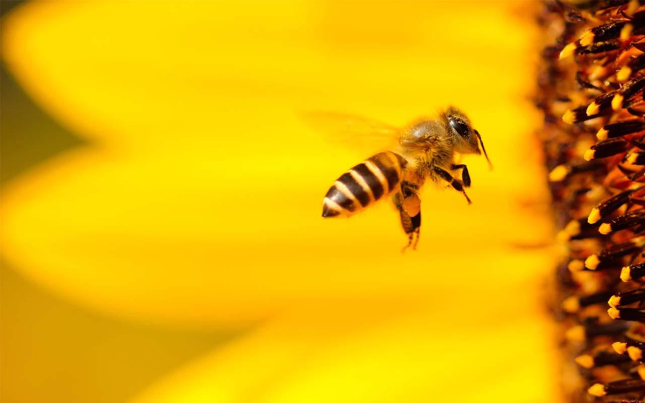 bee, population, facts, people, life, science, Morgan Freeman, weird