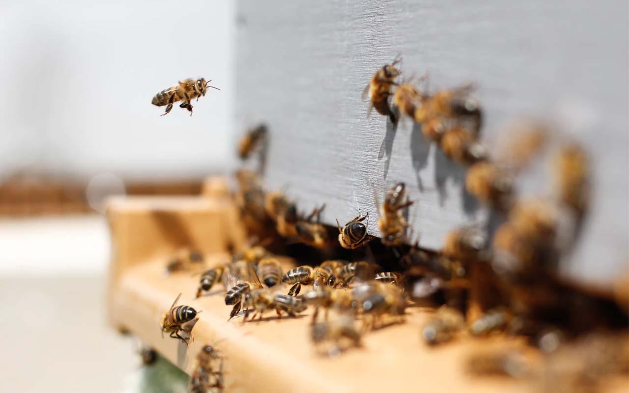 bee, population, life, facts, people, Morgan Freeman, life, nature
