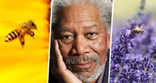 bee, Morgan Freeman, celebrity, facts, life