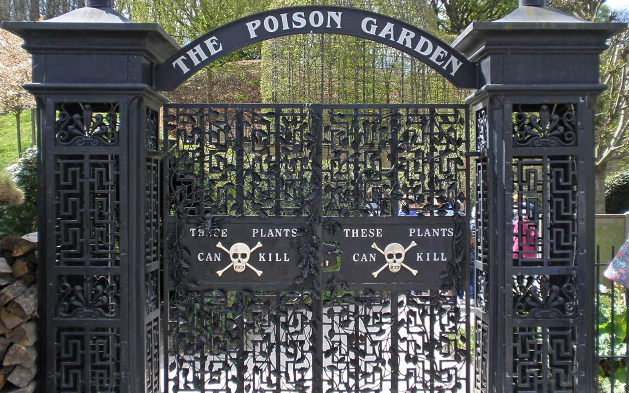 Alnwick garden, poisonous, facts, plants, life, destinations, Earth