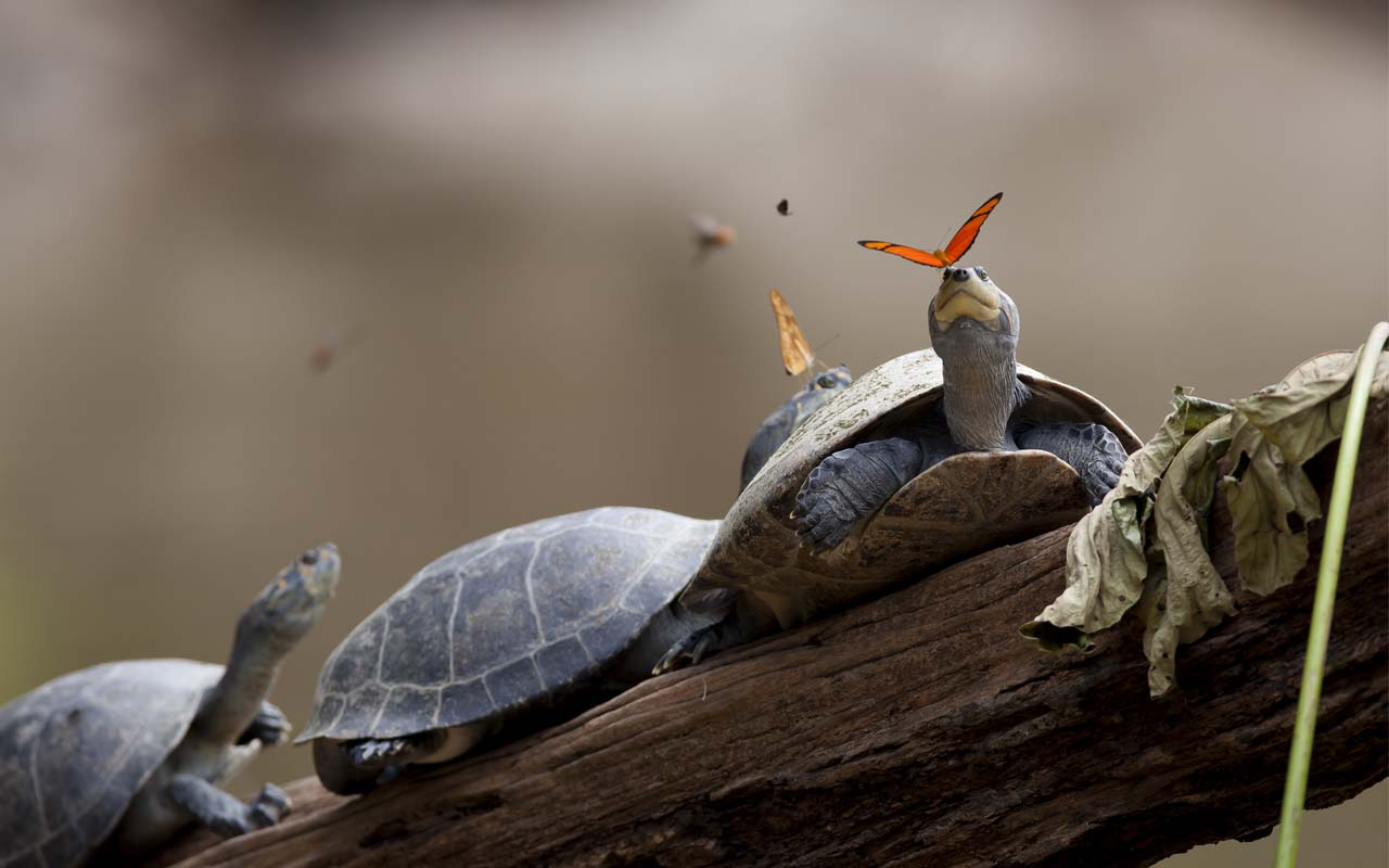 turtles, tears, butterfly, facts, life, guaranteed