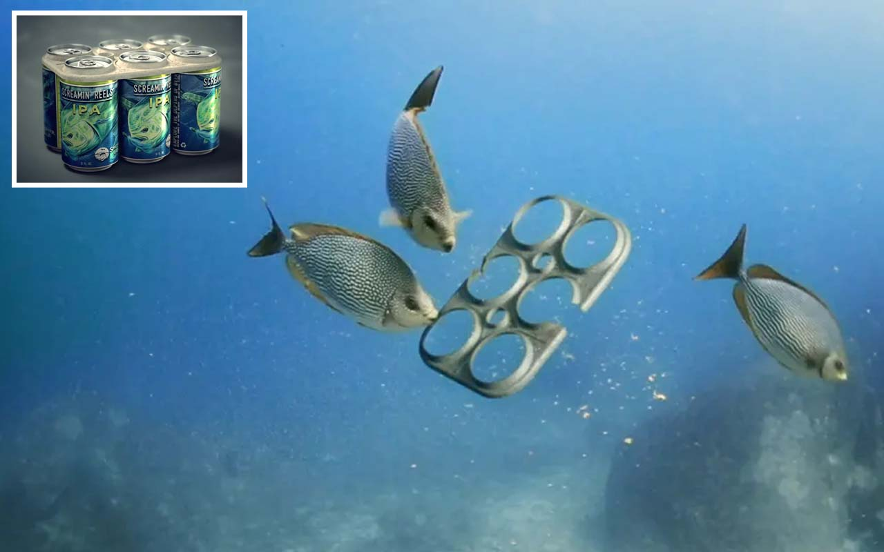 Salt Water Brewery, facts, ocean, life, recycle, disposable, humanity