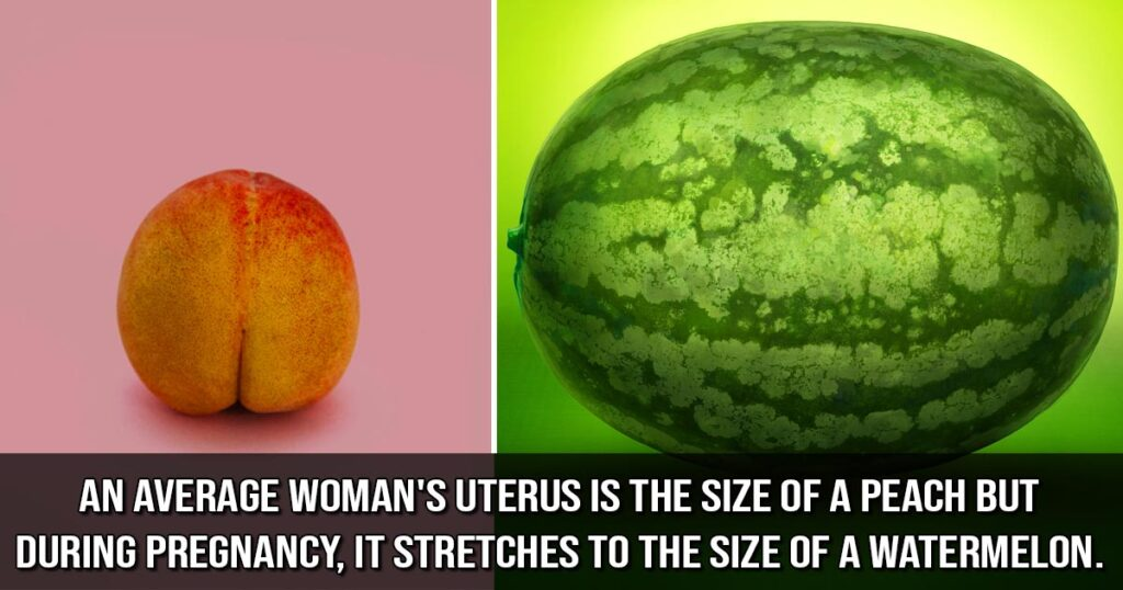 pregnancy, facts, life, people, health
