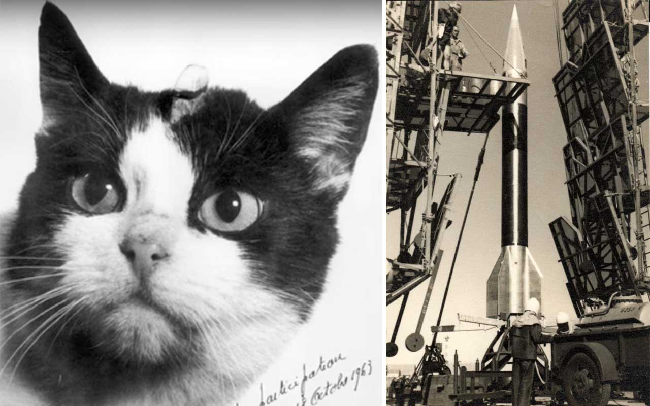 "Félicette or ""Astrocat"", feline, animals, facts, ridiculously, cool, science, entertainment"