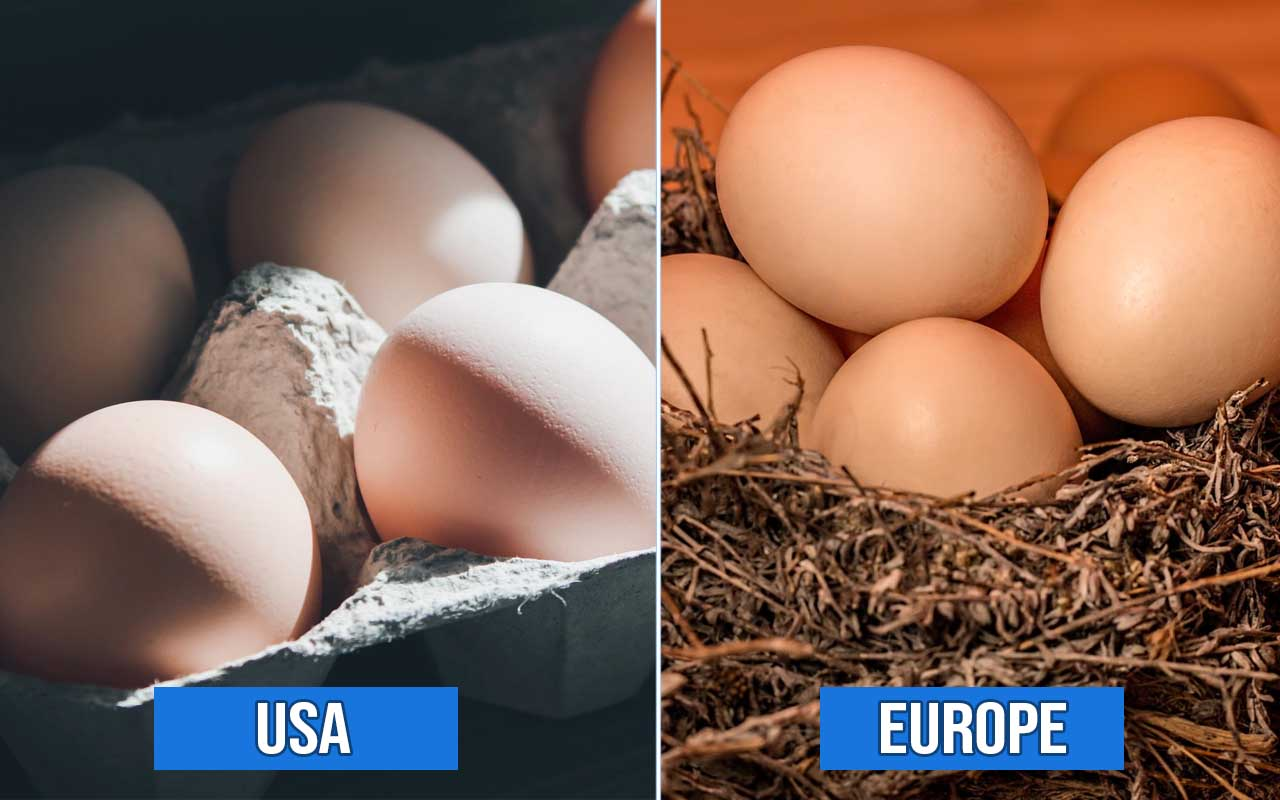 eggs, America, Europe, facts, life, countries, culture
