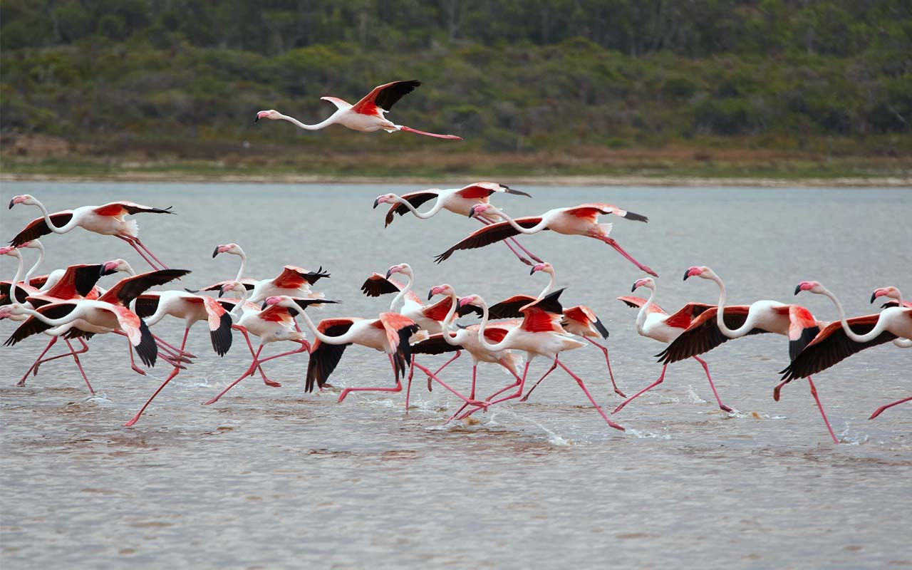 flamingos, facts, nature, life, useless, people