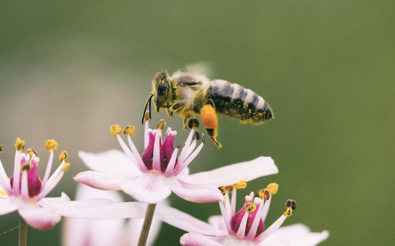 bees, face recognition, facts, life, worth, people, science