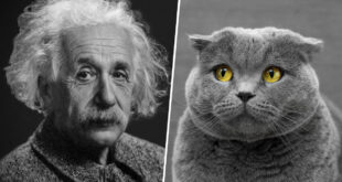 cat, dog, facts, people, animals, science