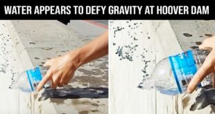 gravity, science, entertainment, facts, Earth
