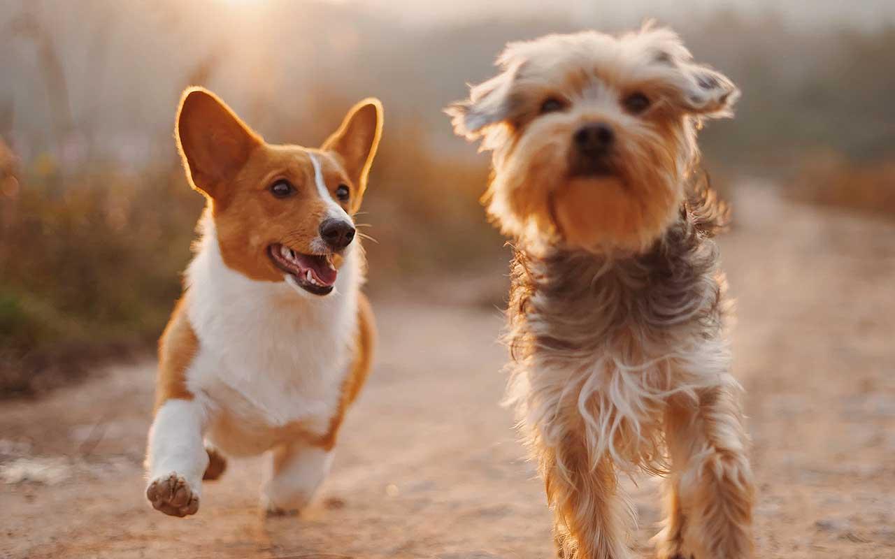 dog, sneeze, playing, animals, pets, reveal, life, nature