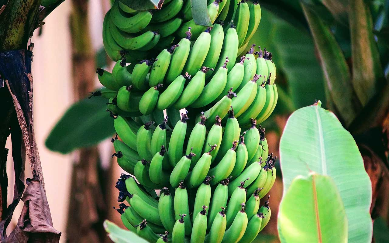 bananas, curved, life, nature, Earth, reveal