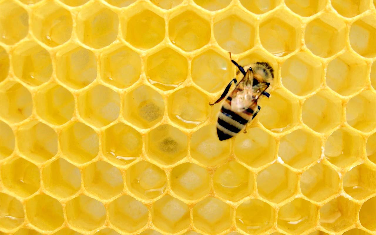 honey, ancient, Egypt, facts, life, thought