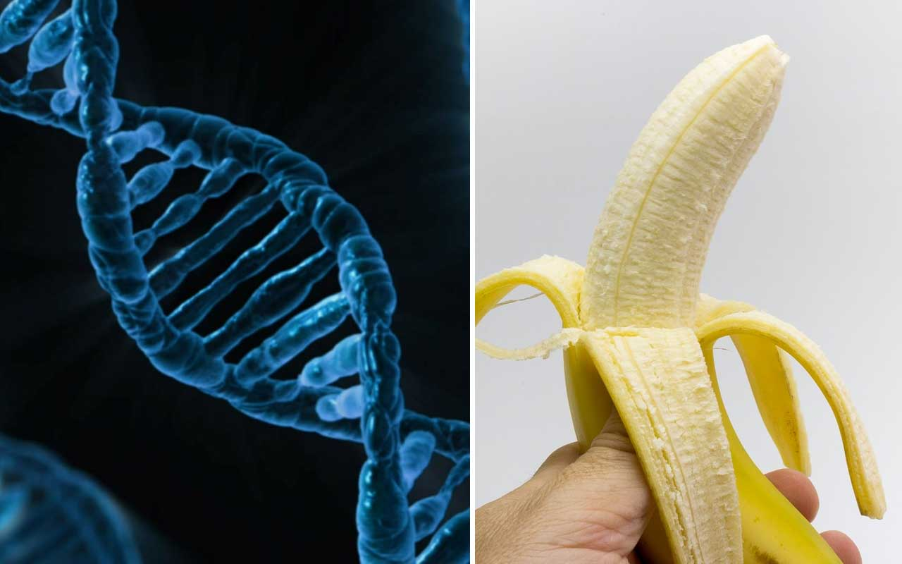 humans, DNA, bananas, facts, life, science, world
