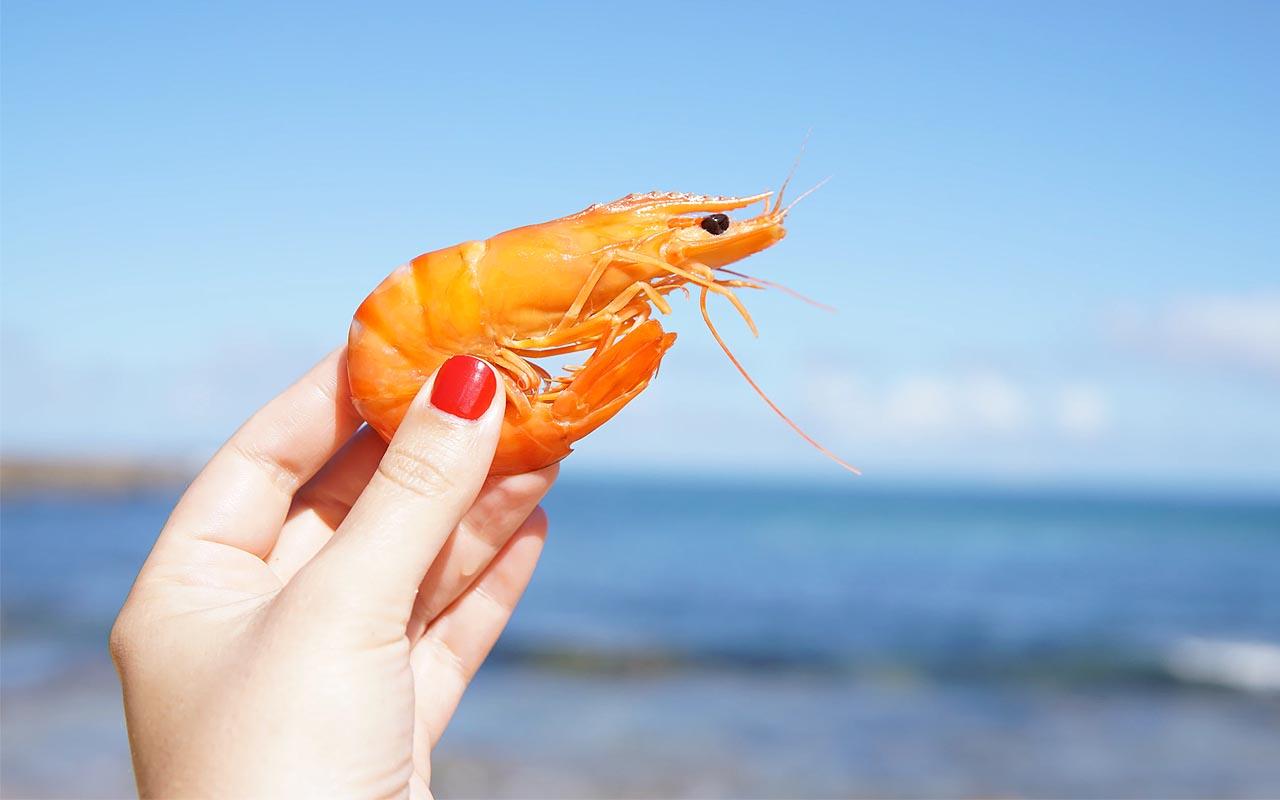 shrimp, heart, head, science, nature, study