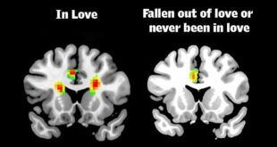brain, facts, science, life, people, relationships