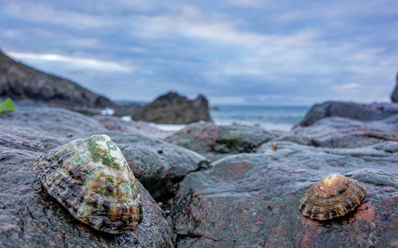 Limpets, Marine snails, facts, ocean, kevlar, animals, sea, nature