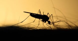 mosquitos, facts, nature, insects, life