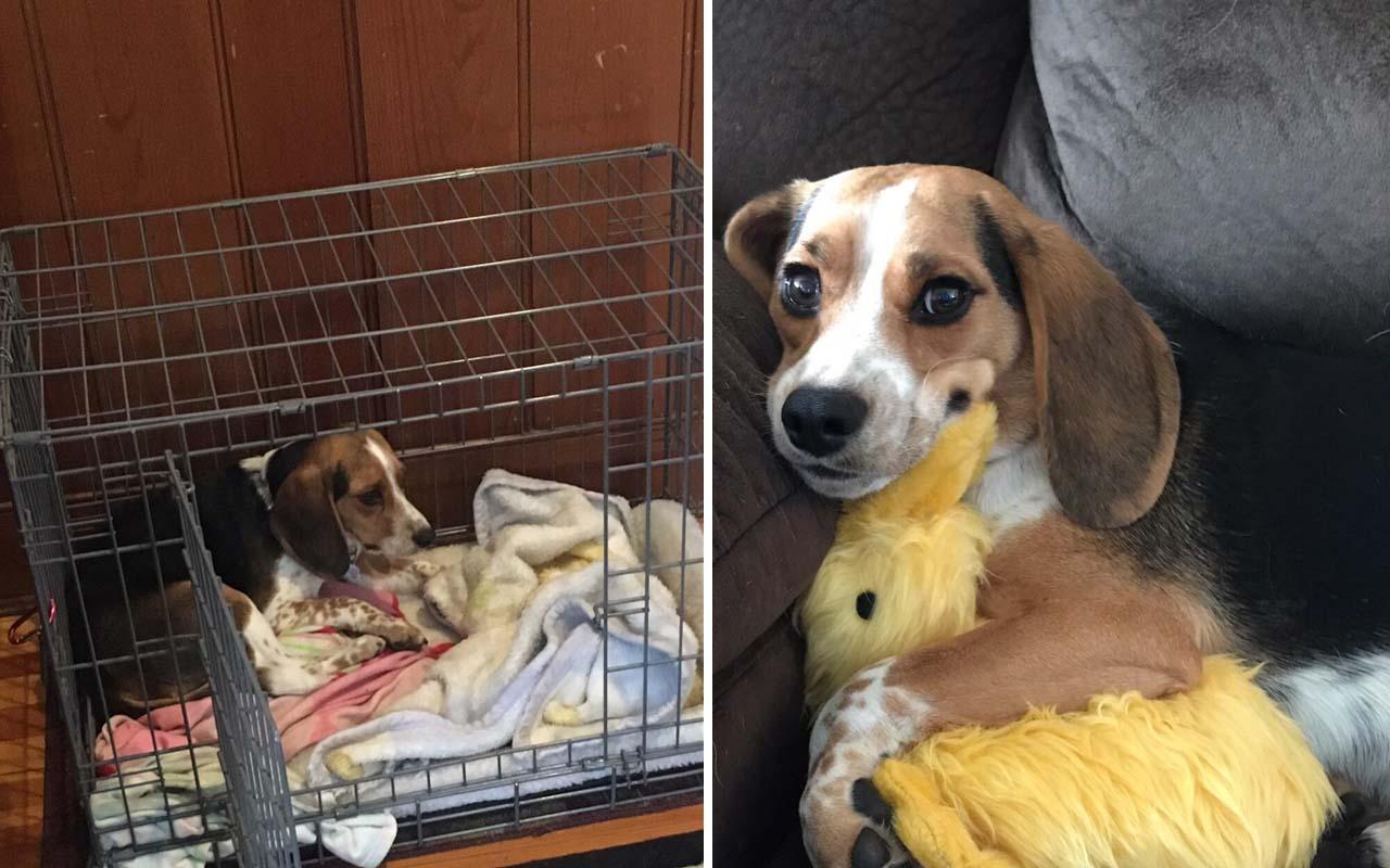 dog, adoption, life, cuddle, helping, shelter, facts, nature, animals