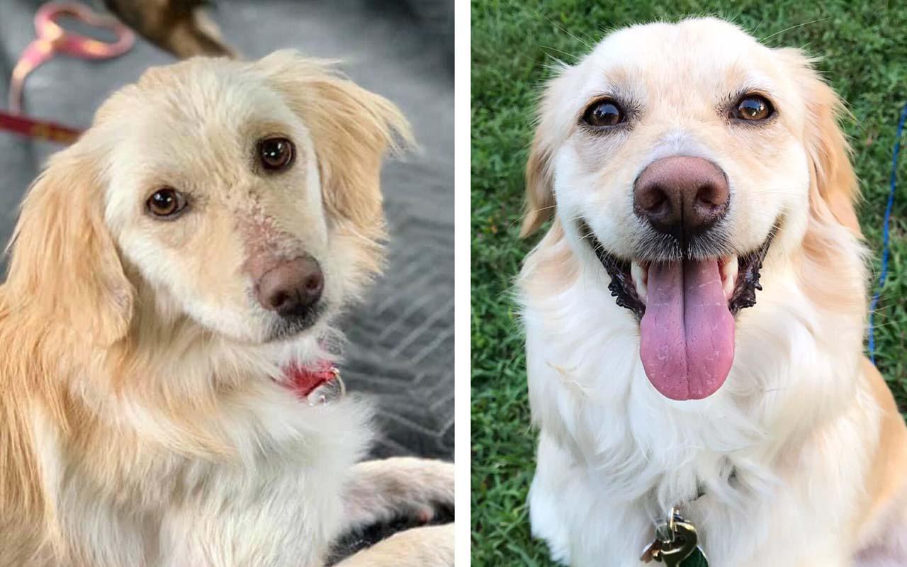 Sammy, dog, animals, facts, people, life, pets, shelter