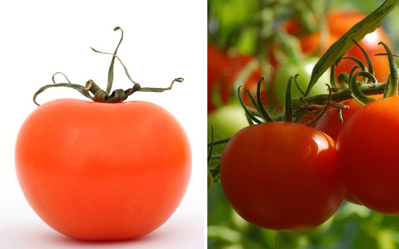 tomatoes, plant, vegetables, fruits, berries, life, foods, people, farming