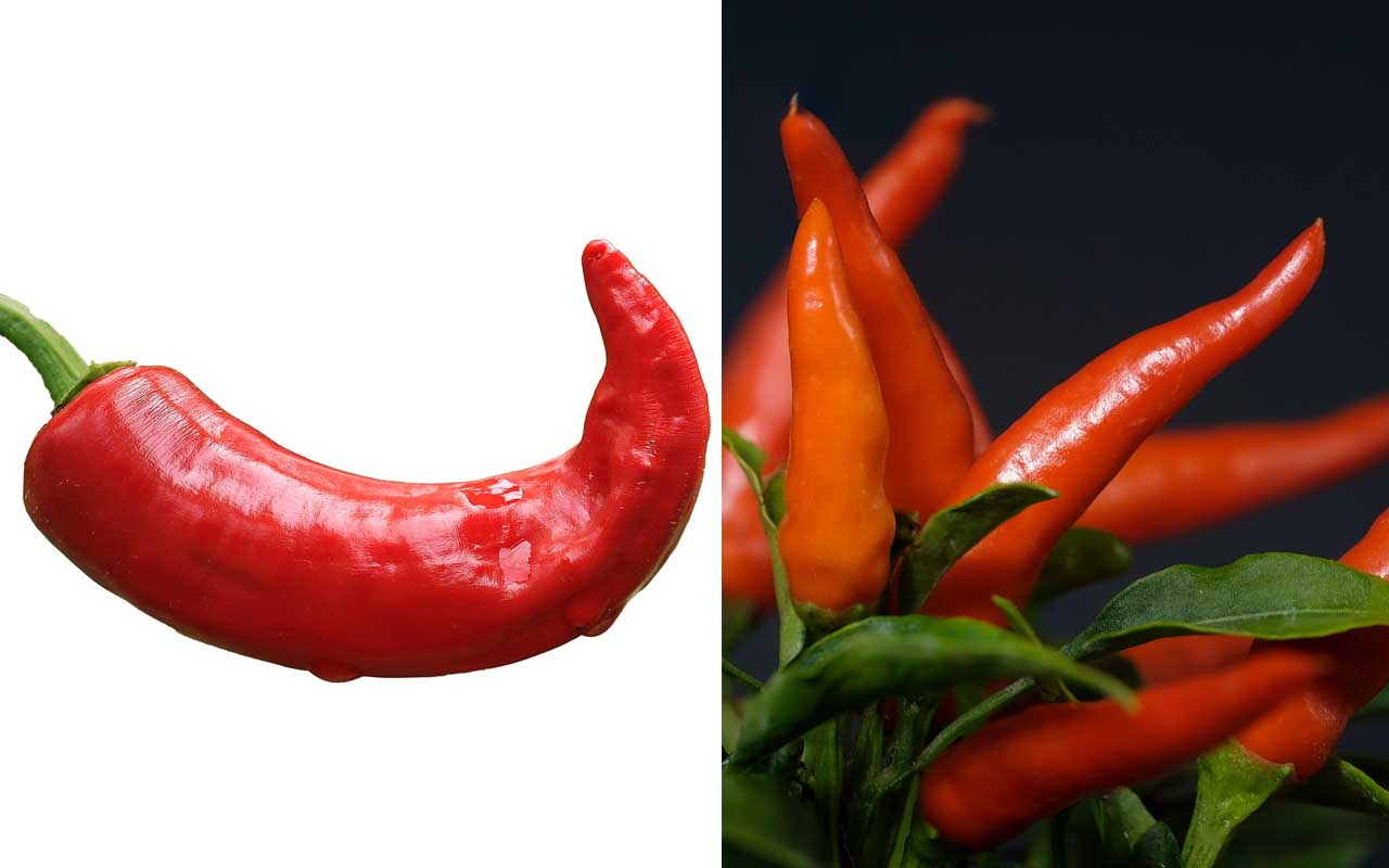 chili pepper, red, spicy, foods, facts, life, people, dishes