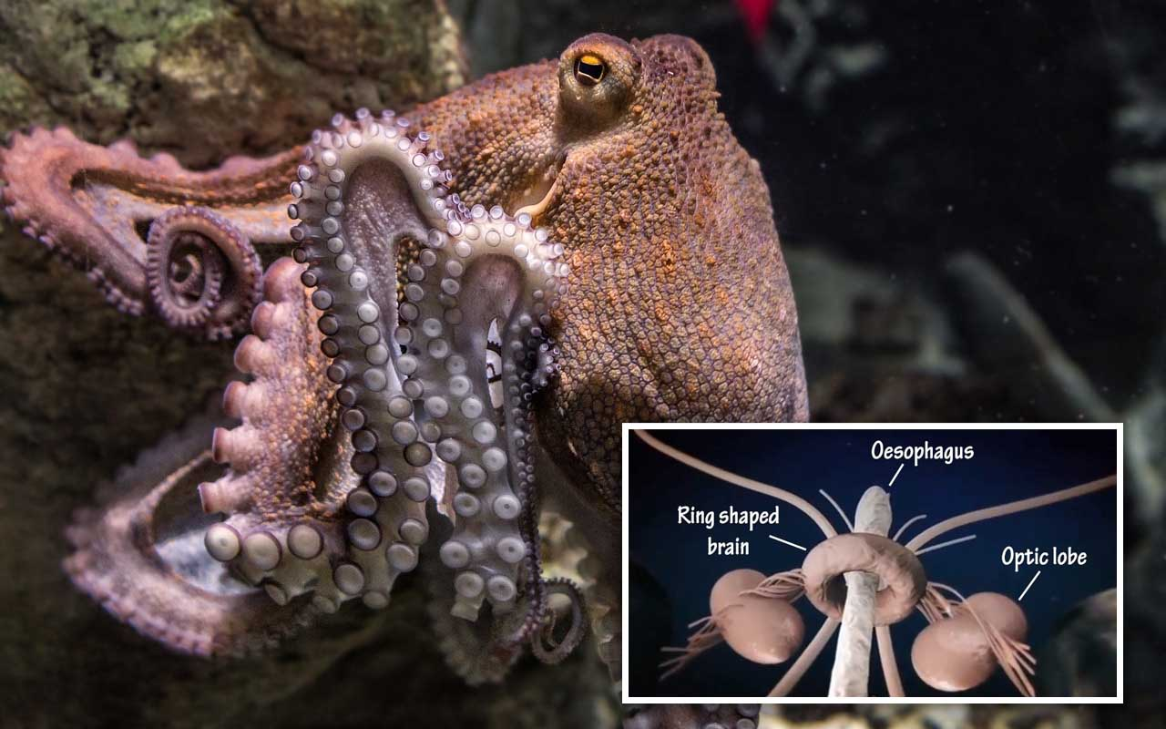 octopus, facts, life, nature, false, true, ocean