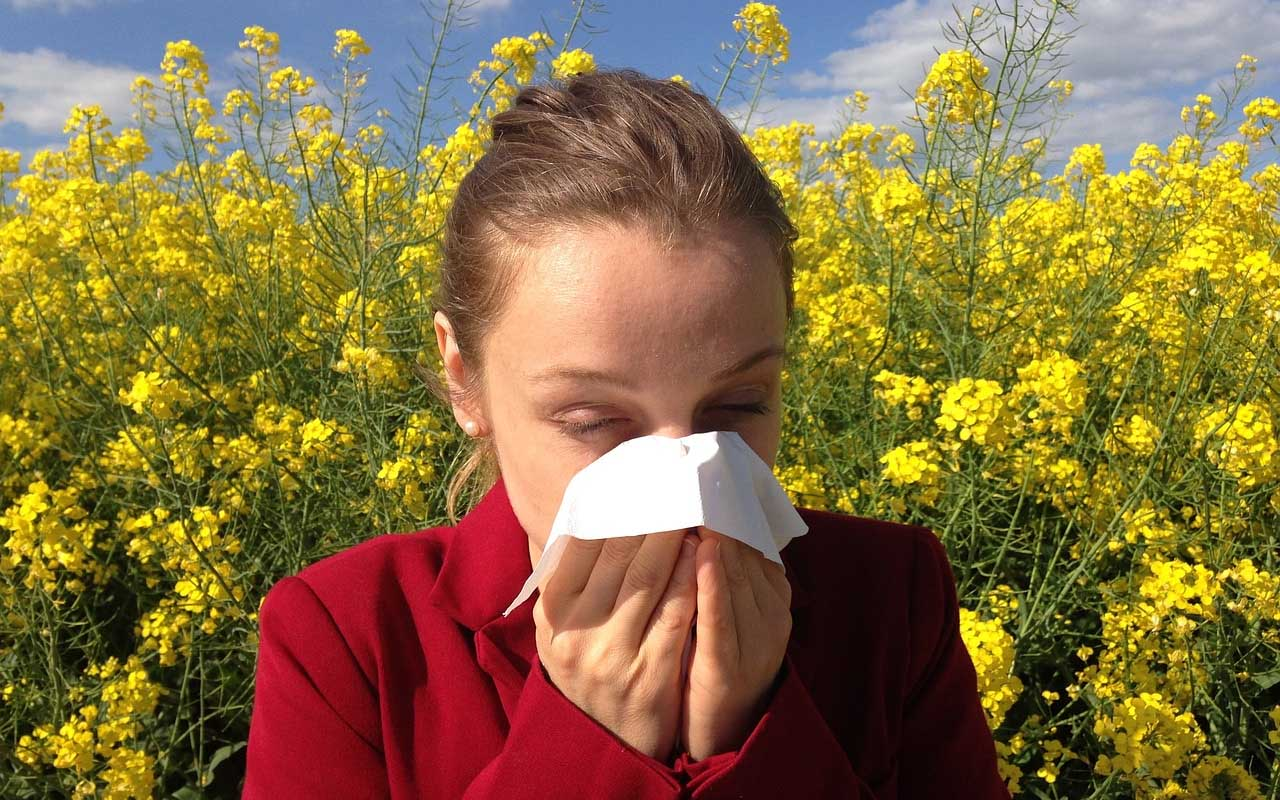 antihistamines, allergy, facts, people, life, travel, nature
