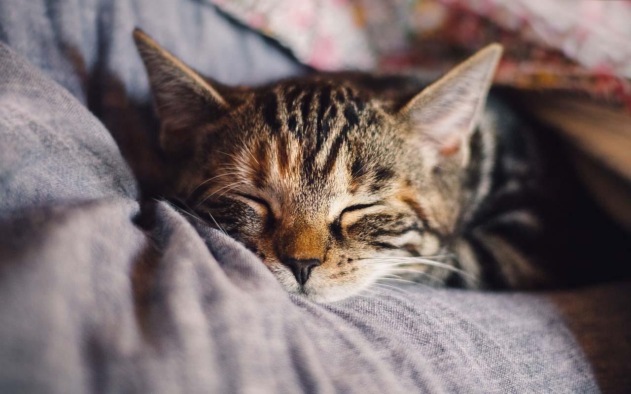 cat, sleeping, behavior, affection, life, facts, animals