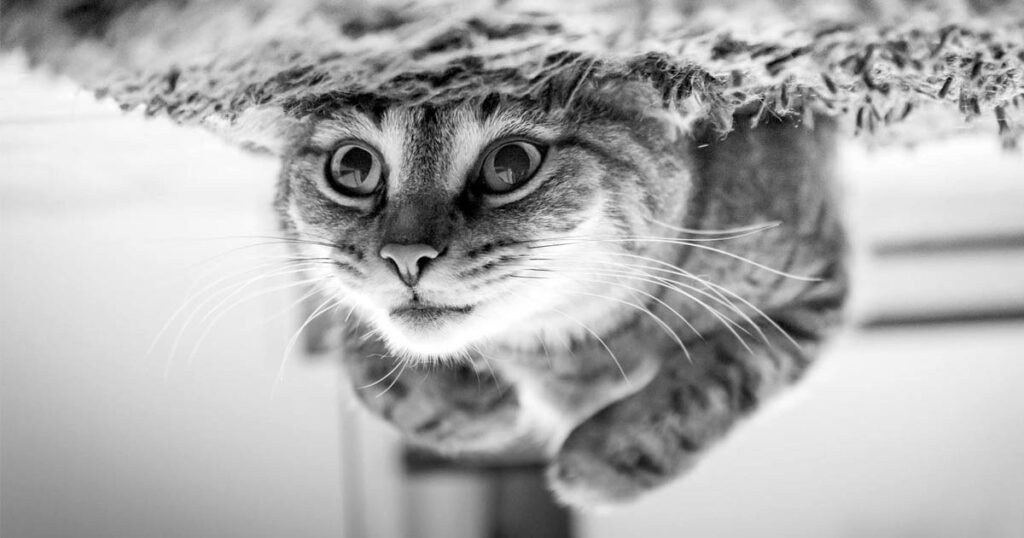 cats, love, facts, science, life, animals
