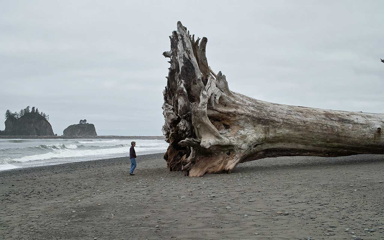 La Push, Washington, PA, driftwood, ocean, beach, life, facts, La Push
